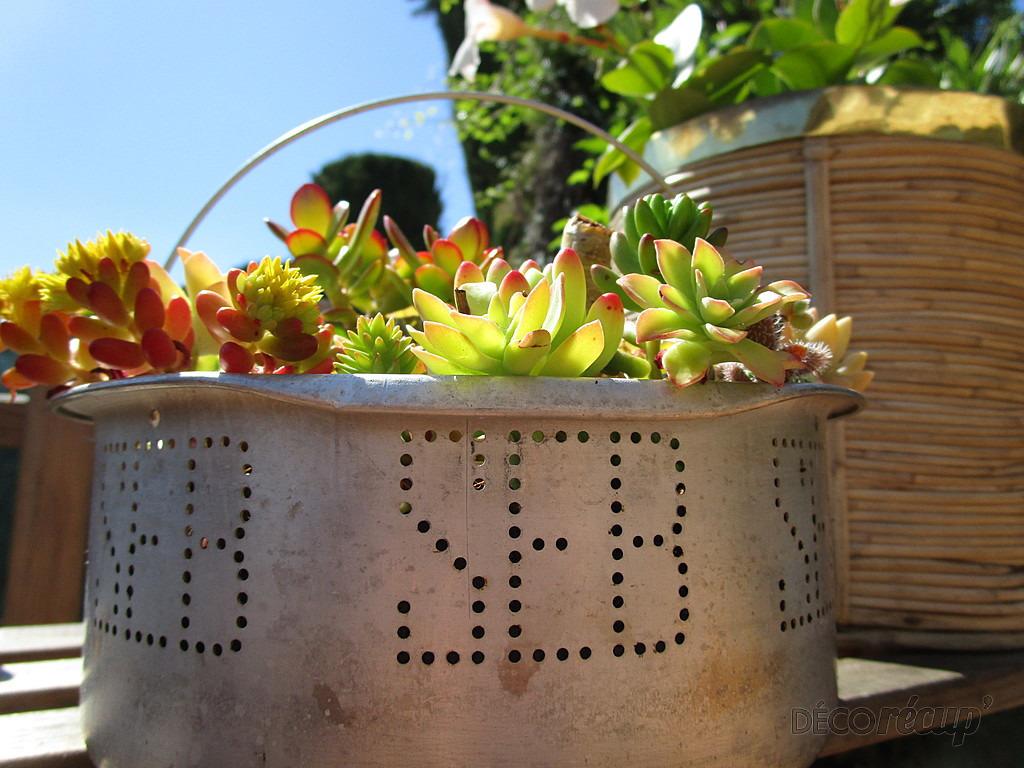 r cup et plantes grasses par nathalie tournier. Black Bedroom Furniture Sets. Home Design Ideas